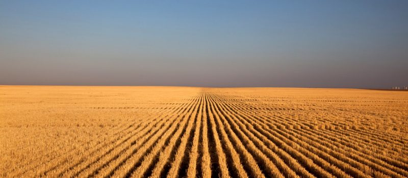"""The Wichita Art Museum is exhibiting """"Kansas Land: Farm Photography by Larry Schwarm and Bryon Darby with University of Kansas Faculty"""" through January 2019. The exhibit explores many facets of farming and how it has evolved. Photos include Schwarm's """"Wheat Stubble at Sunrise, Lane County."""""""